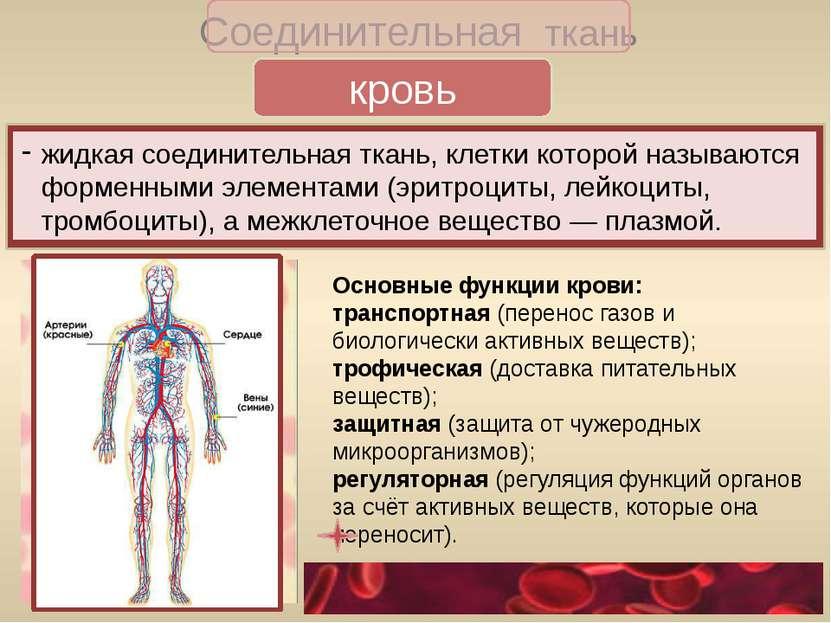 хрящевая Соединительная ткань выполняют опорную функцию костная формирует ске...