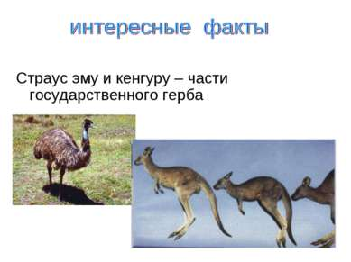 Страус эму и кенгуру – части государственного герба