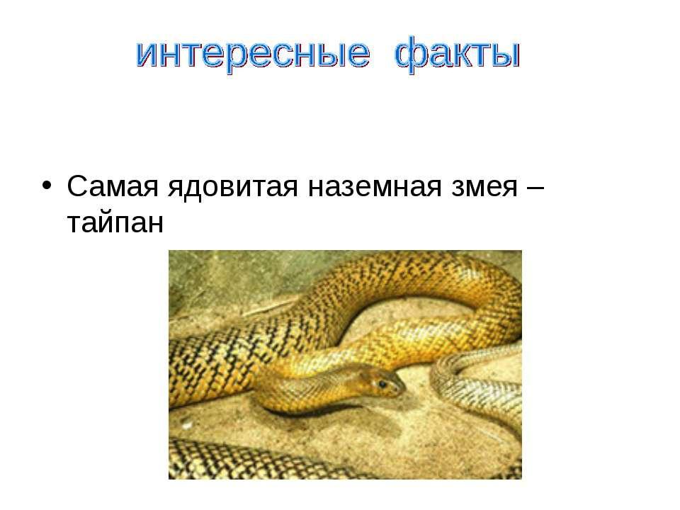 Самая ядовитая наземная змея – тайпан