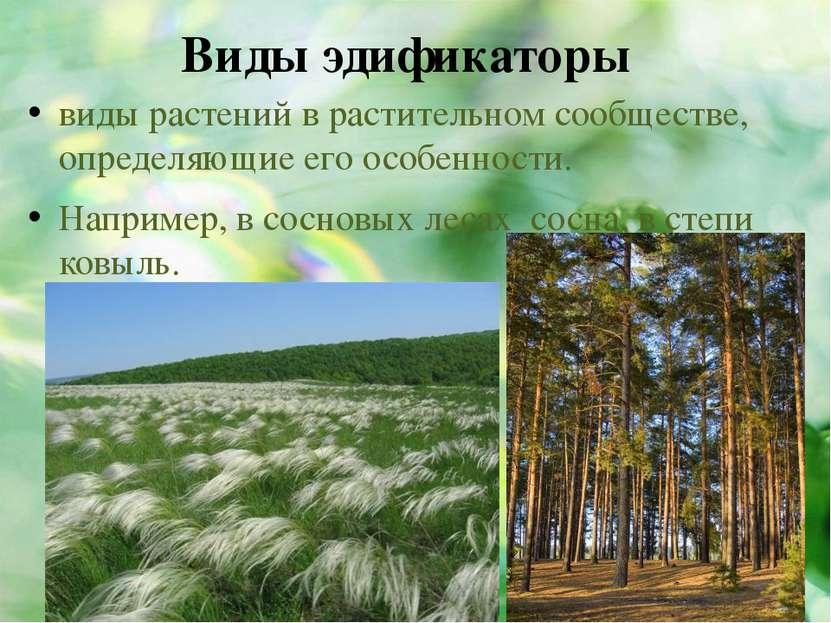 Виды эдификаторы виды растений в растительном сообществе, определяющие его ос...