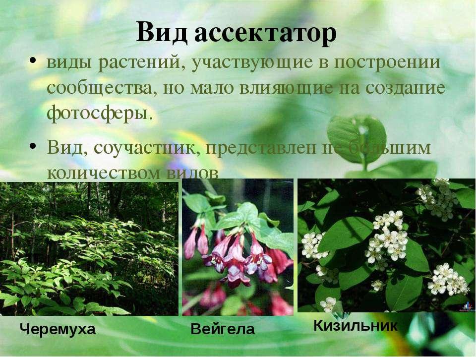 Вид ассектатор виды растений, участвующие в построении сообщества, но мало вл...