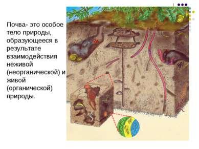 Почва- это особое тело природы, образующееся в результате взаимодействия нежи...