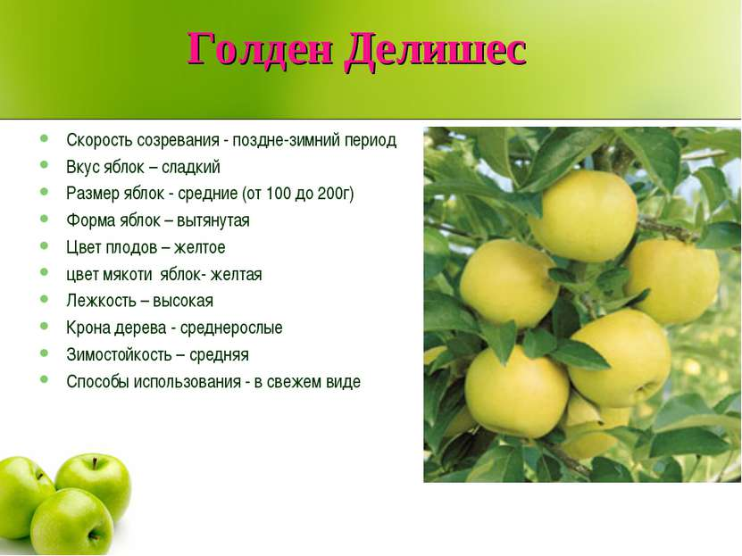 Голден Делишес Скорость созревания - поздне-зимний период Вкус яблок – сладки...