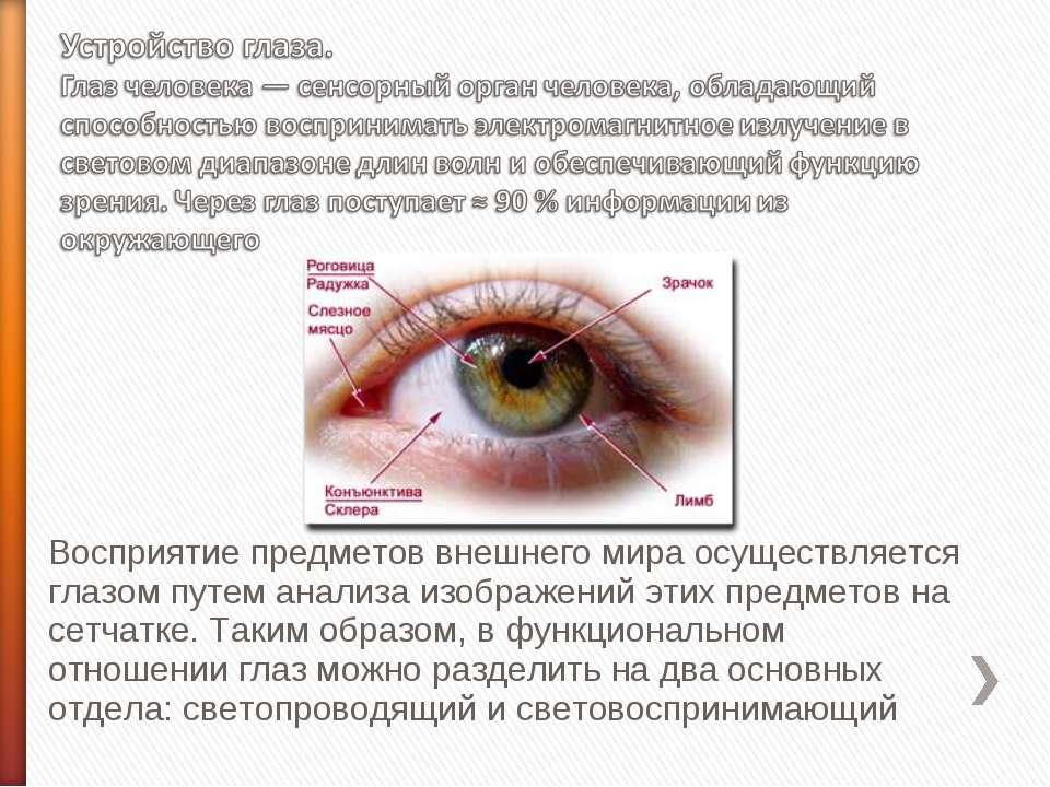 Восприятие предметов внешнего мира осуществляется глазом путем анализа изобра...