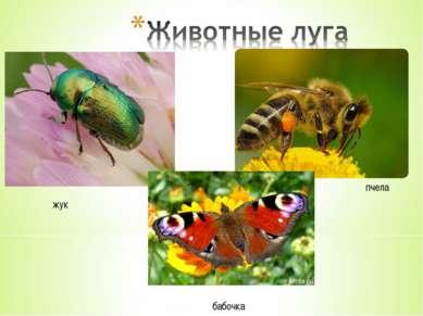 жук пчела бабочка