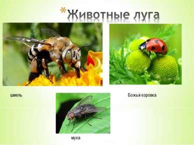 шмель Божья коровка муха
