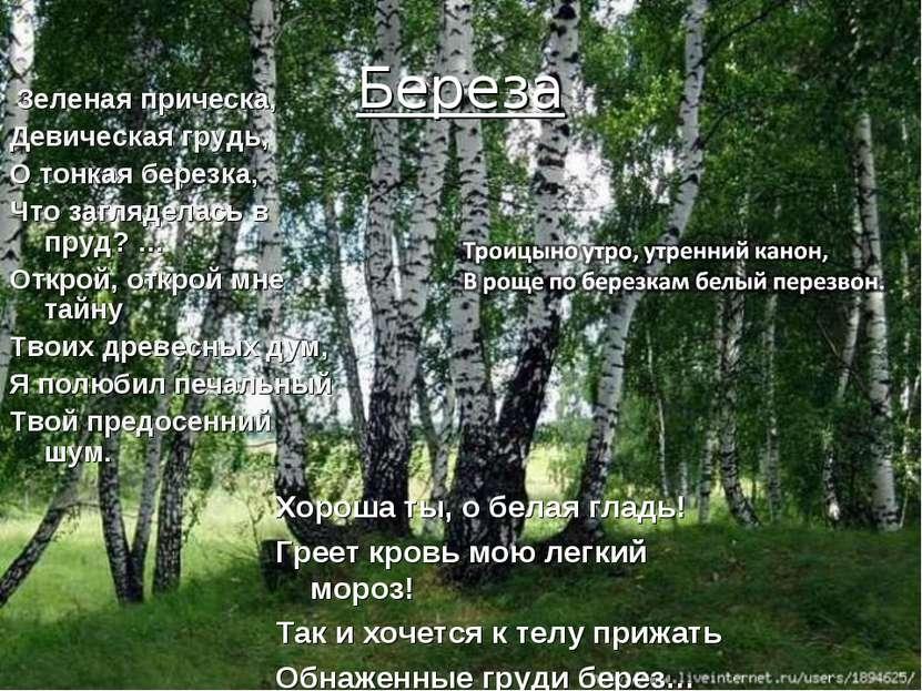 Береза Зеленая прическа, Девическая грудь, О тонкая березка, Что загляделась ...