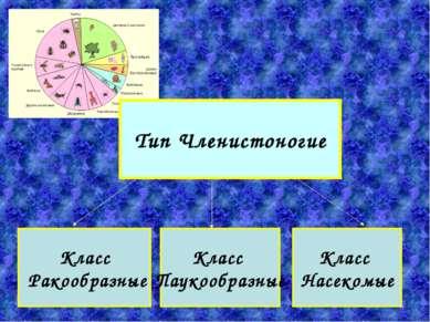 Класс Паукообразные Класс Насекомые Класс Ракообразные Тип Членистоногие