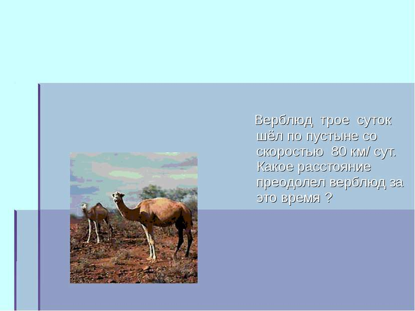 Верблюд трое суток шёл по пустыне со скоростью 80 км/ сут. Какое расстояние п...