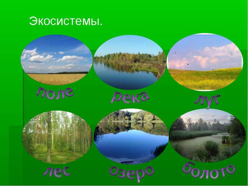 Экосистемы.
