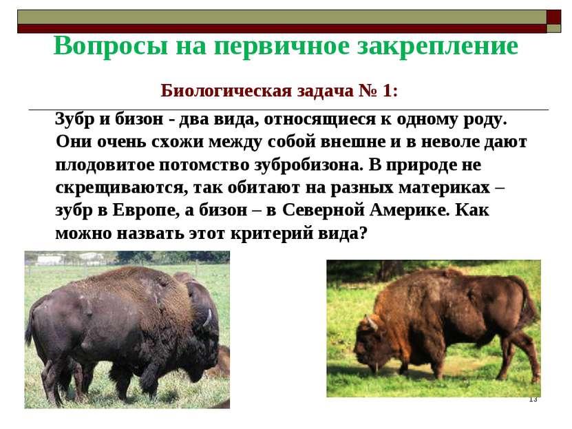 Вопросы на первичное закрепление Биологическая задача № 1: Зубр и бизон - два...