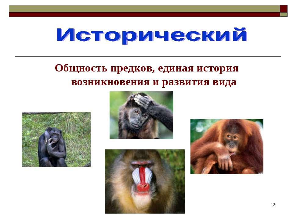 * Общность предков, единая история возникновения и развития вида