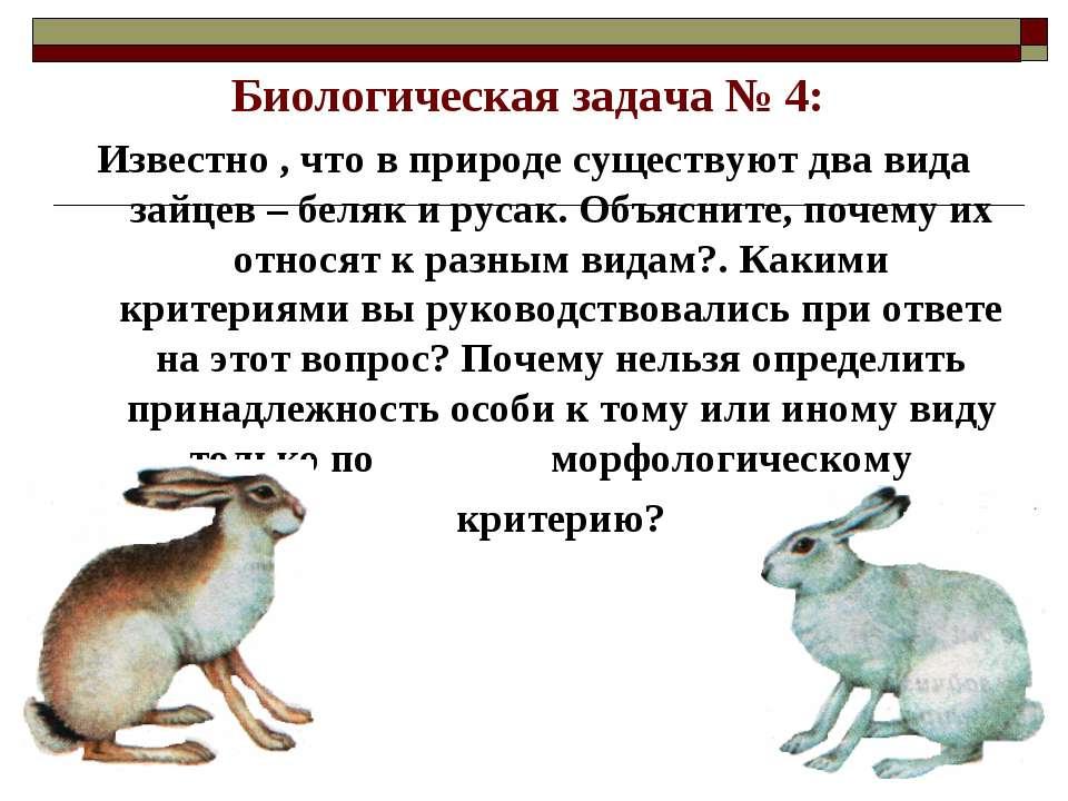 Биологическая задача № 4: Известно , что в природе существуют два вида зайцев...