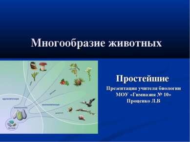 Многообразие животных Простейшие Презентация учителя биологии МОУ «Гимназия №...