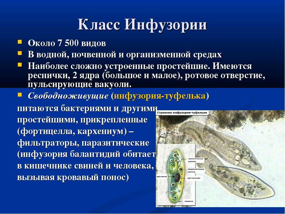 Класс Инфузории Около 7 500 видов В водной, почвенной и организменной средах ...