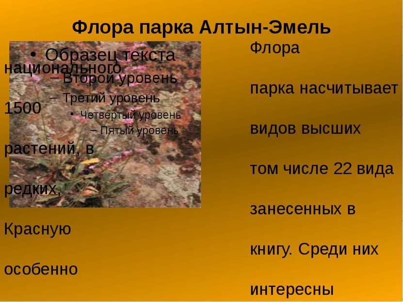 Флора парка Алтын-Эмель Флора национального парка насчитывает 1500 видов высш...