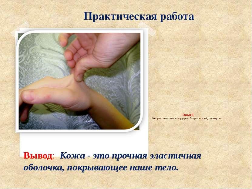 Опыт 1 Мы рассмотрели кожу руки. Потрогали её, потянули. Вывод: Кожа - это пр...