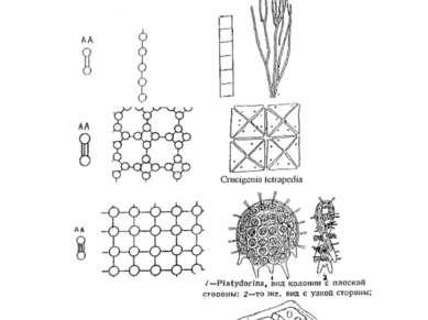 Гистионы и их полимеры (клеточные решетки) различной размерности