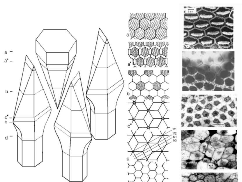 3-D организация пласта с гистионом состава АВ3