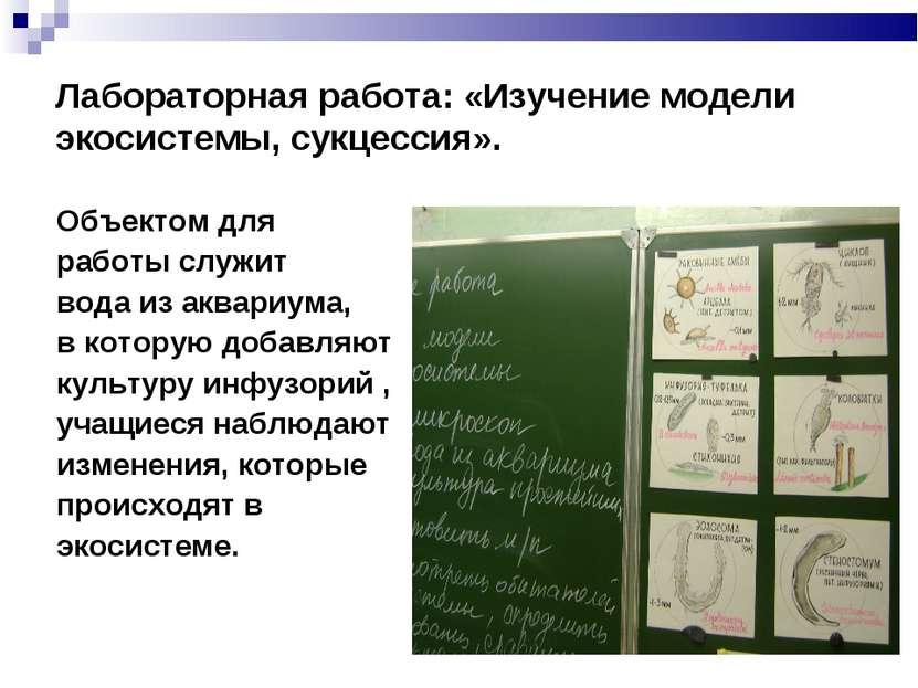 Лабораторная работа: «Изучение модели экосистемы, сукцессия». Объектом для ра...