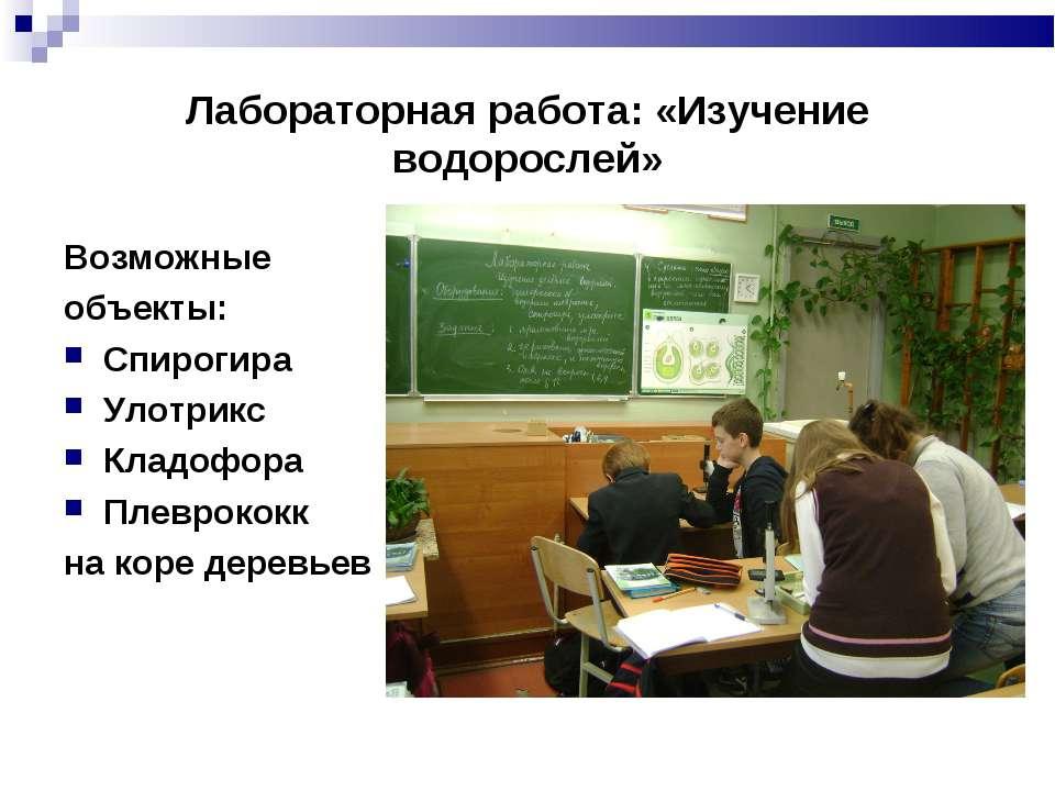 Лабораторная работа: «Изучение водорослей» Возможные объекты: Спирогира Улотр...