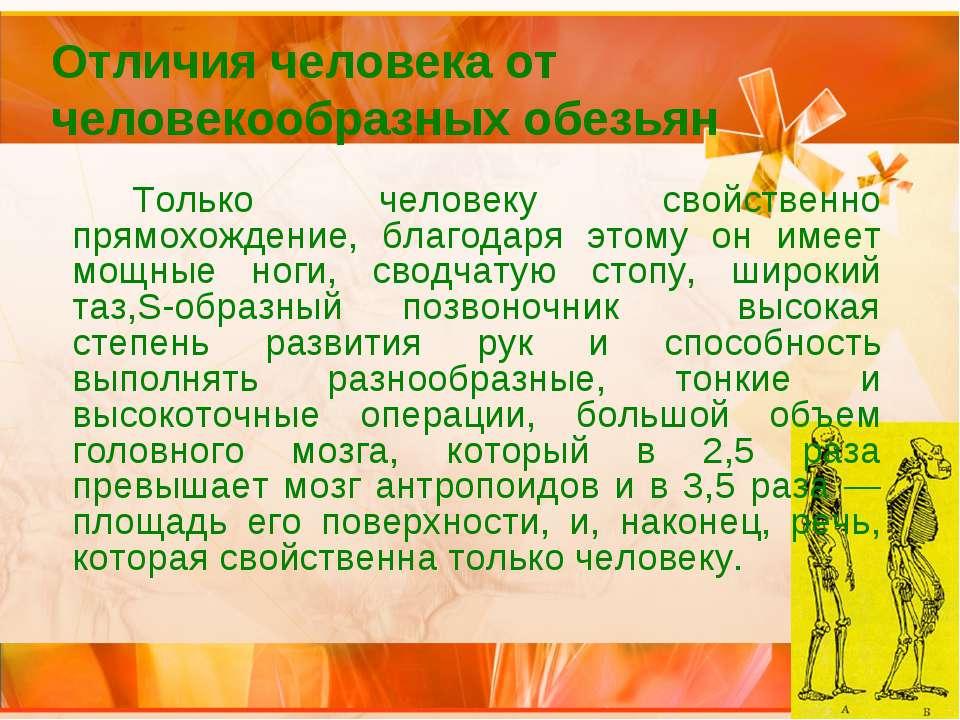 Отличия человека от человекообразных обезьян Только человеку свойственно прям...