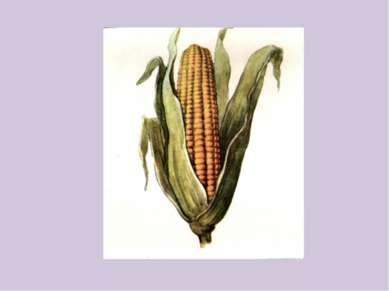 Кукуру…