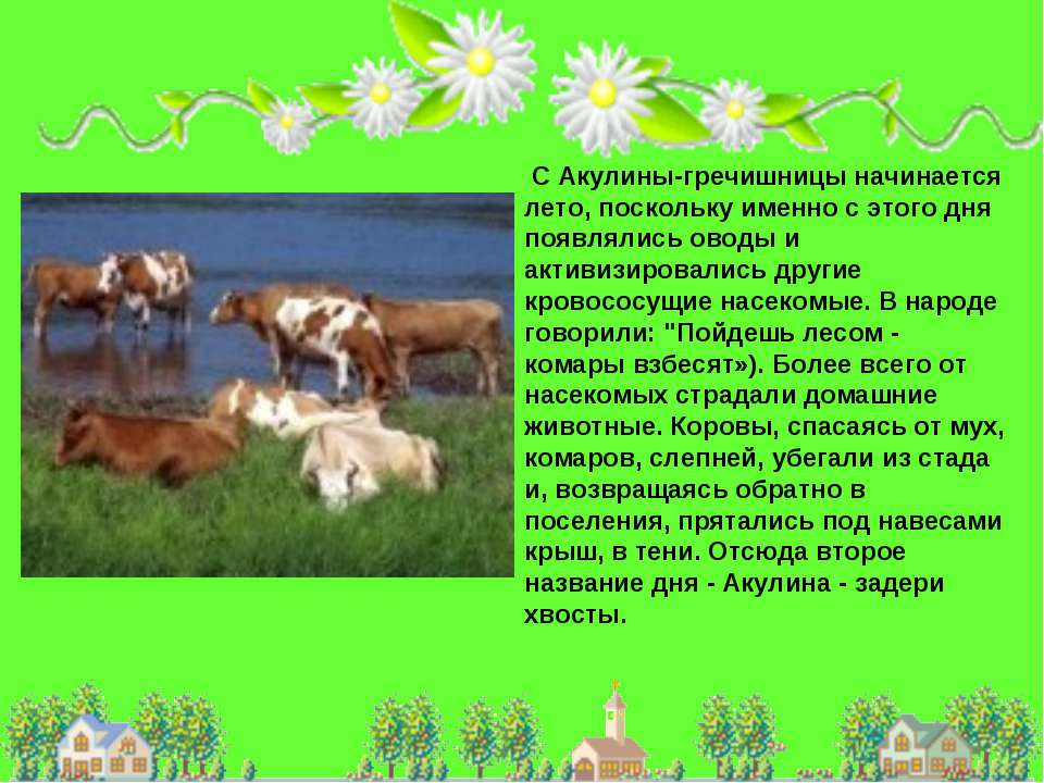 С Акулины-гречишницы начинается лето, поскольку именно с этого дня появлялись...
