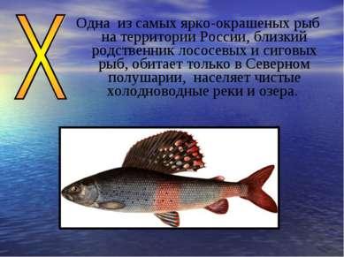Одна из самых ярко-окрашеных рыб на территории России, близкий родственник ло...