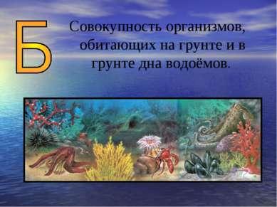 Совокупность организмов, обитающих на грунте и в грунте дна водоёмов.