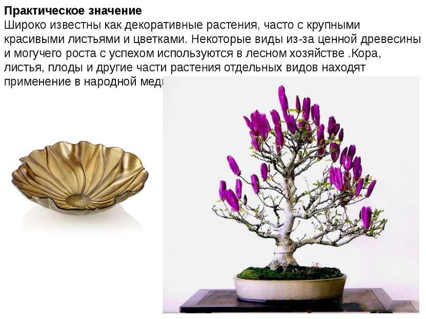 Практическое значение Широко известны как декоративные растения, часто с круп...
