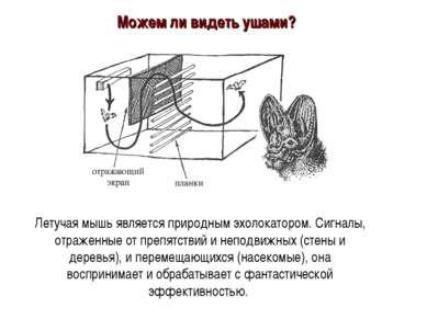 Летучая мышь является природным эхолокатором. Сигналы, отраженные от препятст...