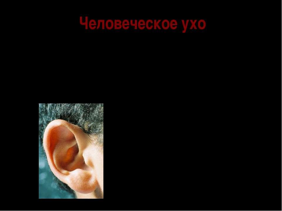 Человеческое ухо Человеческое ухо имеет сложное устройство. Функционально ухо...