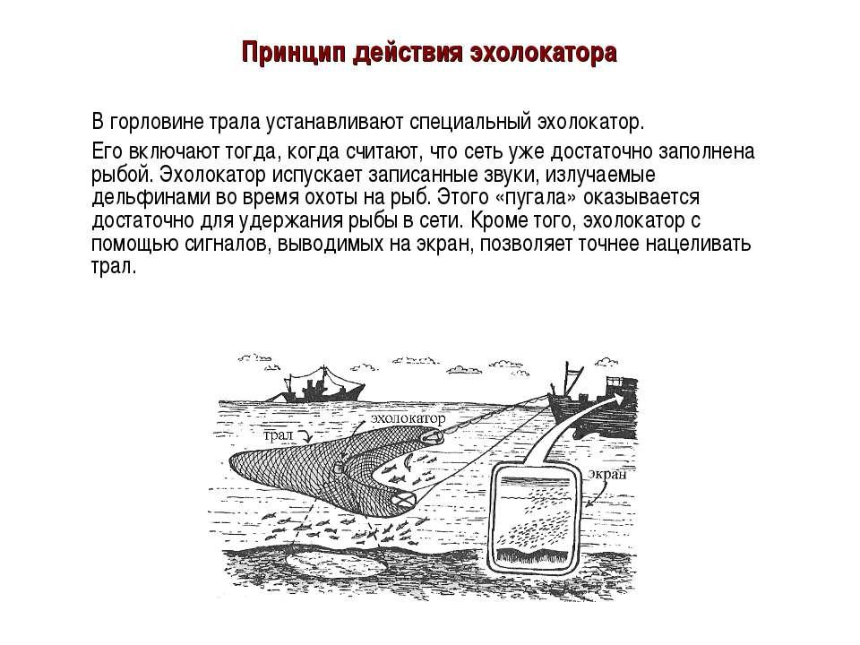 Принцип действия эхолокатора В горловине трала устанавливают специальный эхол...