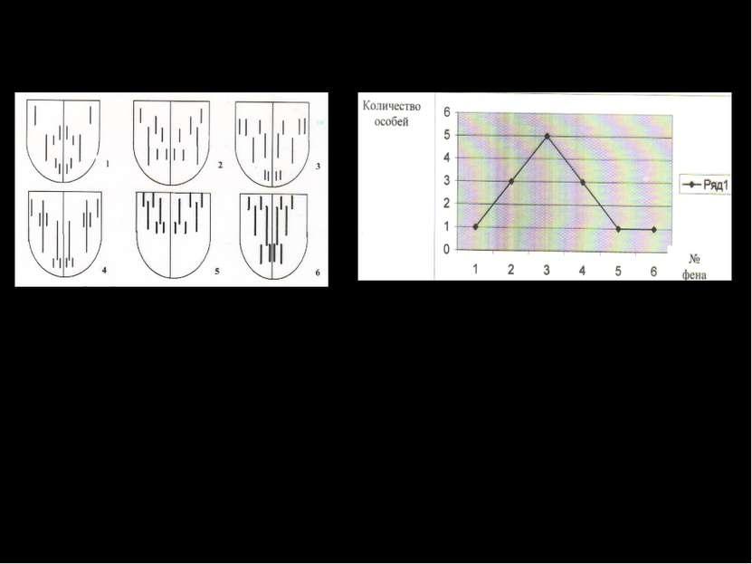 Внутривидовая изменчивость афодия шахматного. Вариационная таблица особей вид...