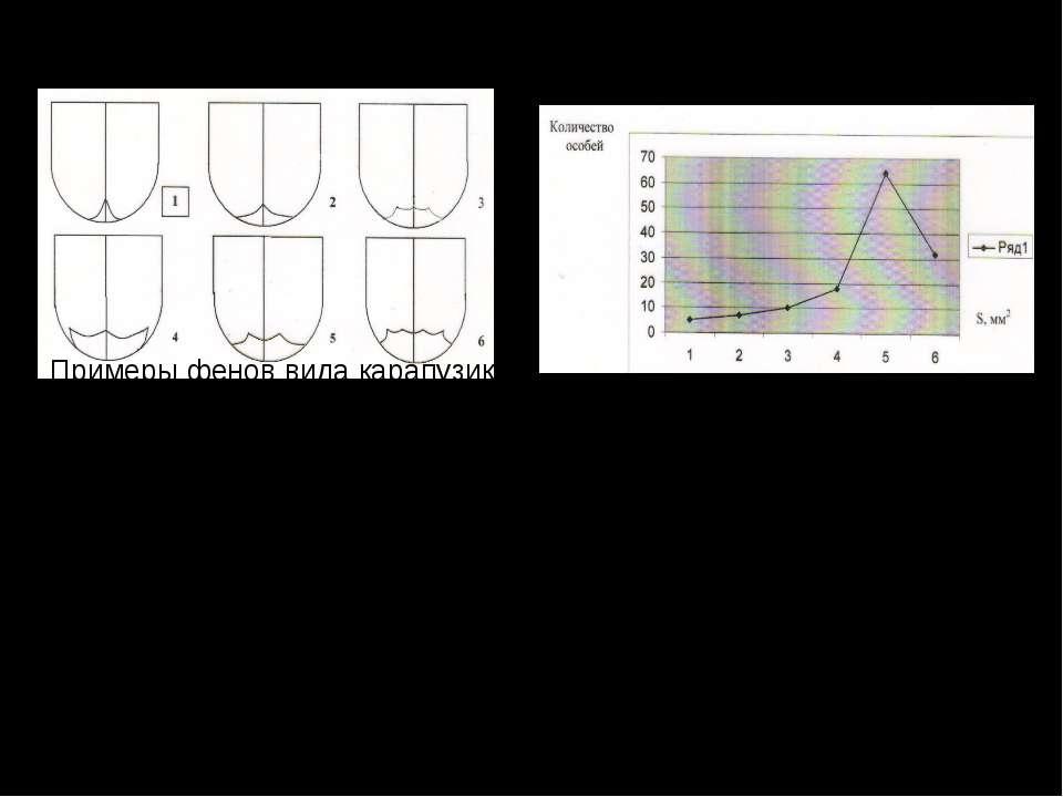 Внутривидовая изменчивость вида карапузик двупятнистый. Вариационная таблица ...