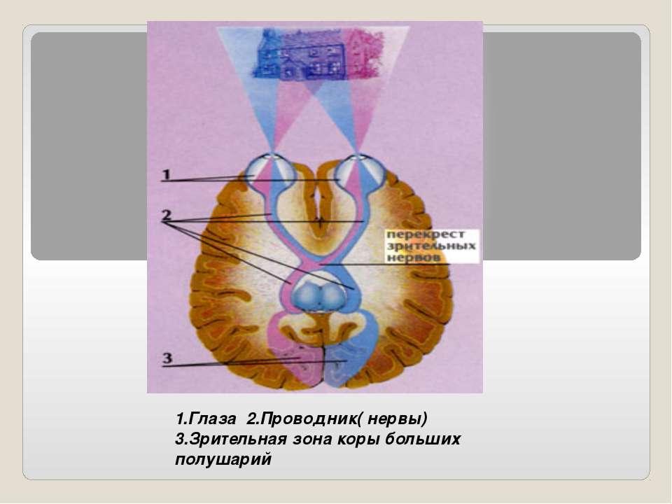 1.Глаза 2.Проводник( нервы) 3.Зрительная зона коры больших полушарий