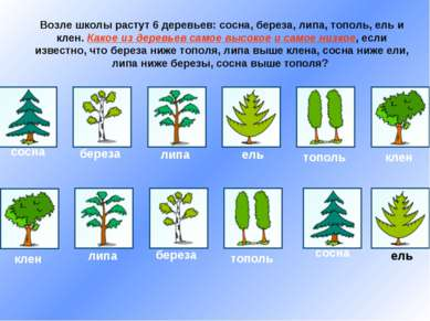 Возле школы растут 6 деревьев: сосна, береза, липа, тополь, ель и клен. Какое...