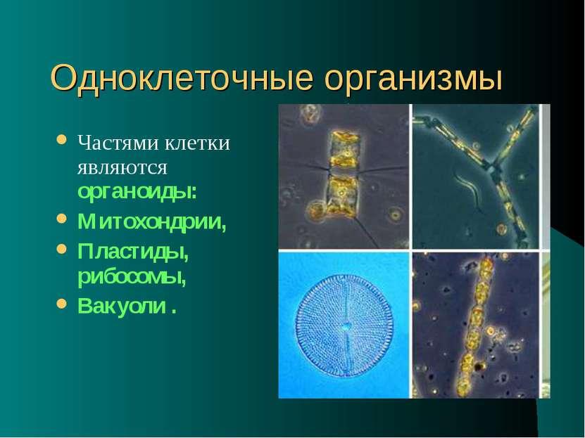 Одноклеточные организмы Частями клетки являются органоиды: Митохондрии, Пласт...