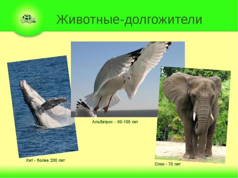 Животные-долгожители