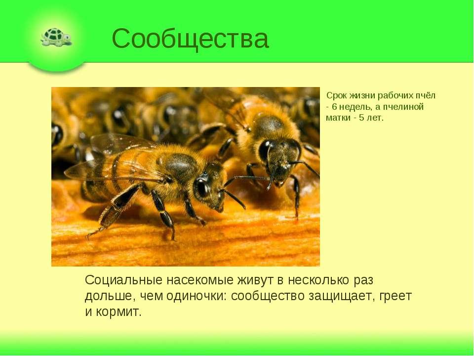 Сообщества Социальные насекомые живут в несколько раз дольше, чем одиночки: с...