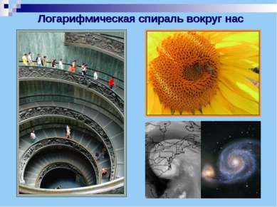 Логарифмическая спираль вокруг нас