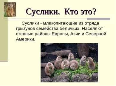 Суслики. Кто это? Суслики - млекопитающие из отряда грызунов семейства беличь...
