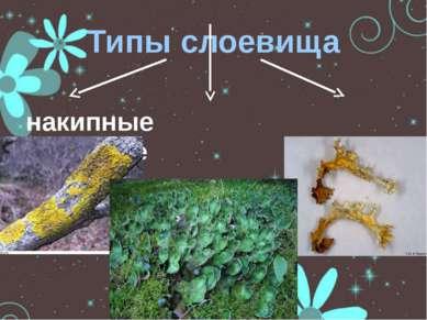 Типы слоевища накипные кустистые листоватые