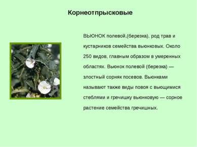ВЬЮНОК полевой,(березка), род трав и кустарников семейства вьюнковых. Около 2...