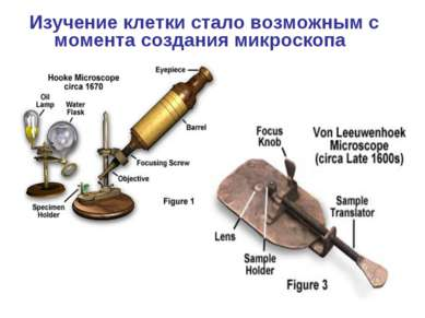 Изучение клетки стало возможным с момента создания микроскопа