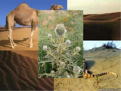 Пустыня. Песчаная пустыня.