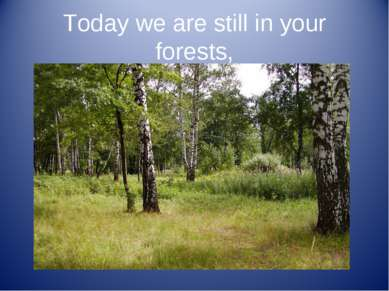 Today we are still in your forests,