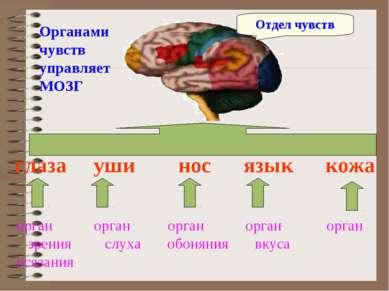 глаза уши нос язык кожа орган орган орган орган орган зрения слуха обоняния в...