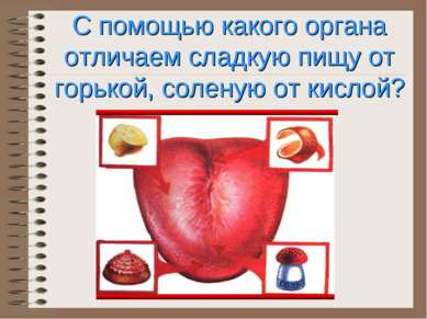 С помощью какого органа отличаем сладкую пищу от горькой, соленую от кислой?